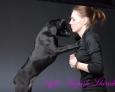 thai ridgeback puppy for sale